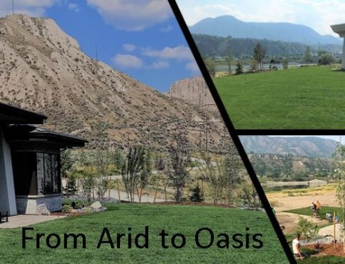 Arid into Oasis with a Residential Lawn Installation