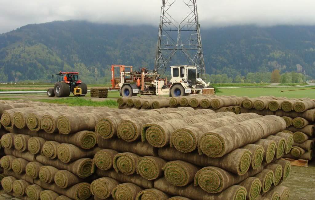 western turf farms - locally grown sod