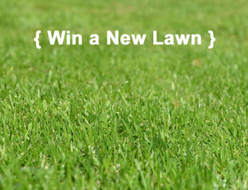 Contest – Win a New Lawn This Spring! $500 Value