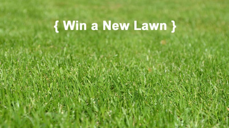 how to take care of new lawn