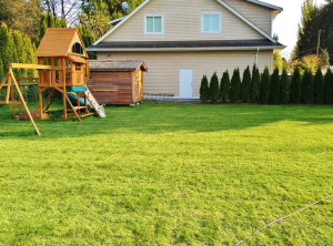 Sod for backyard lawn by Western Turf Farms