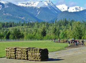 Turf grass for sports field by Western Turf Farms