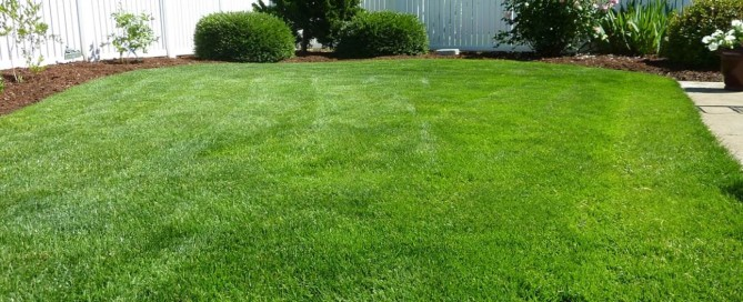Win A New Lawn - Western Turf Farms