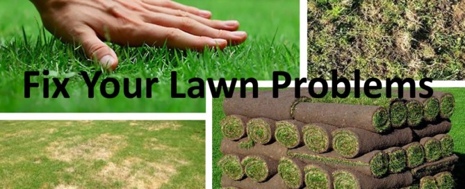 fix your lawn problems