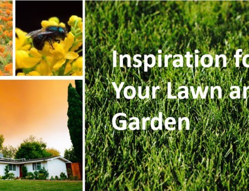 Inspiration for your lawn and garden