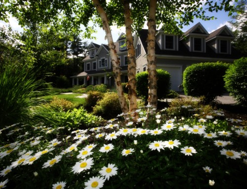 Staying Green with Drought-Resistant Low Water Sod